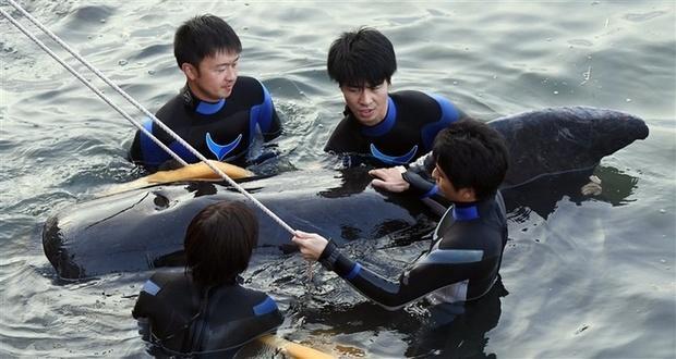 迷いクジラ